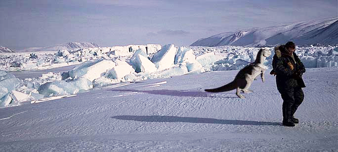 Creature at the glacier